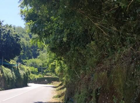 Vegetazione e viabilità